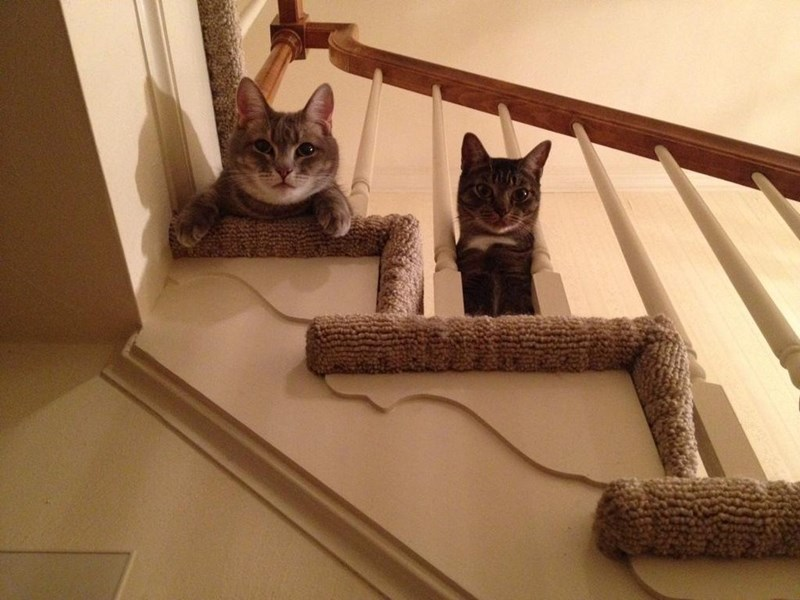 cats chilling and staring on the stairs.