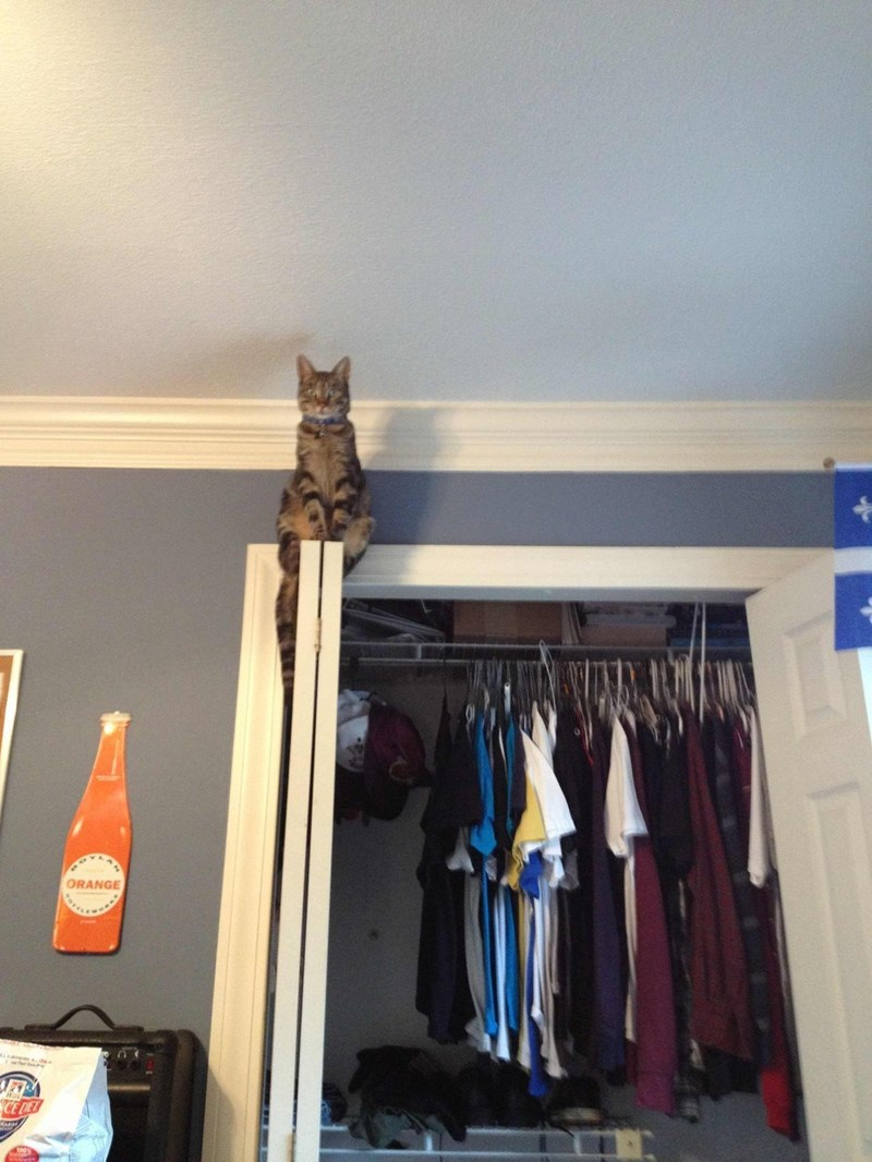 Stalker cat on top of a closet door.