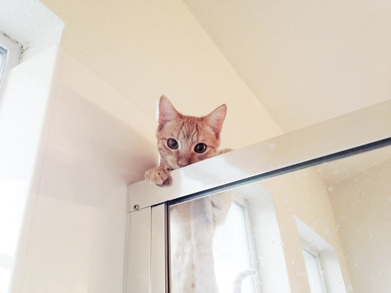 cat staring over the shower door