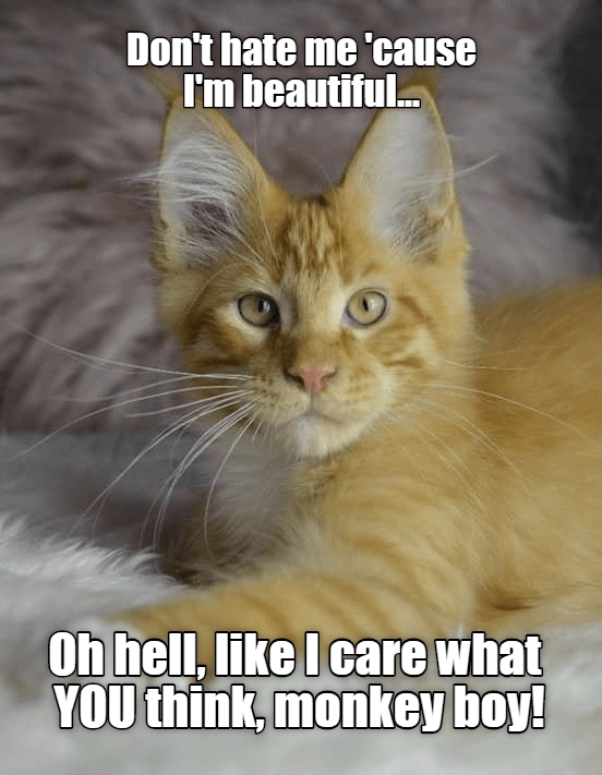 a picture of a pretty cat that thinks the thing looking back at it is very ugly, and asking it not to hate him because he's better looking than the other