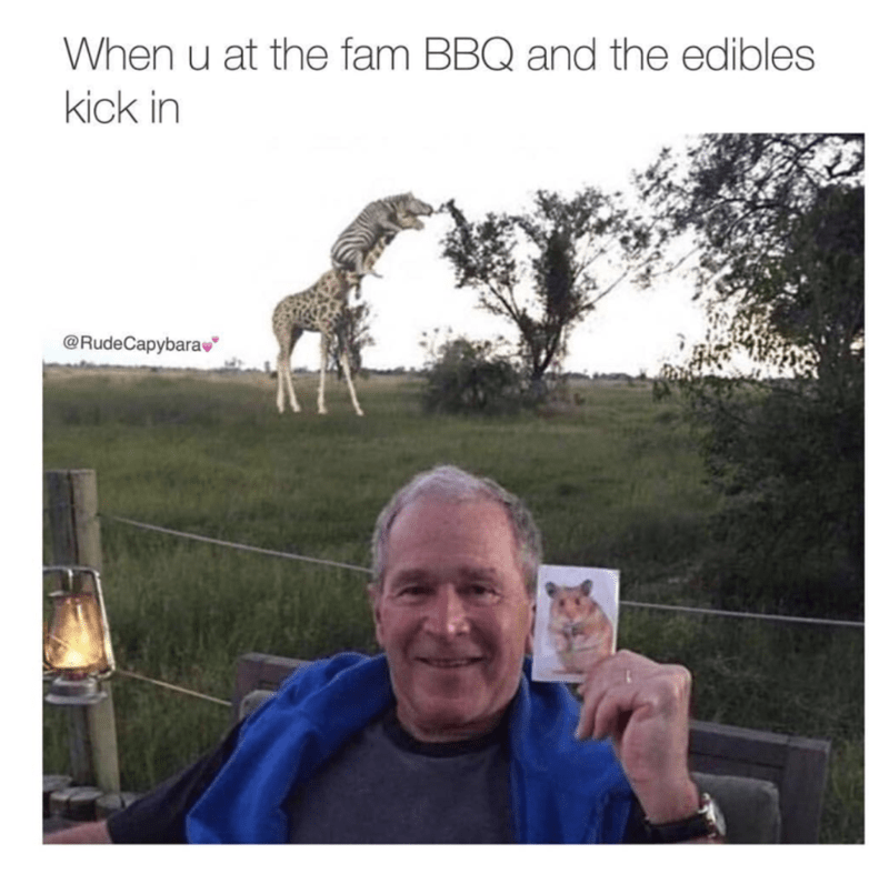 Meme about edibles kicking in at fam BBQ with picture of George W. Bush holding pic of a gerbil while zebras climb a giraffe in the background