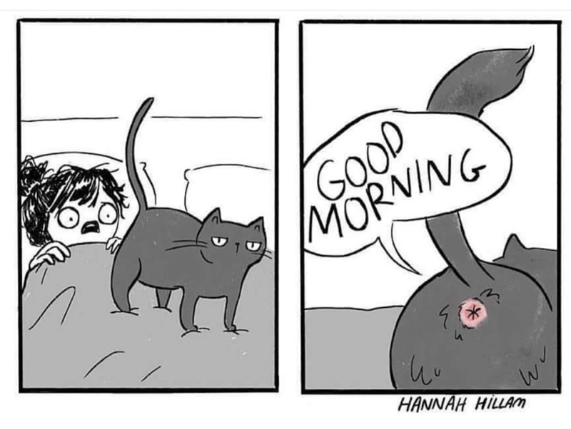 Wednesday meme of a cat cartoon of getting the butt hole in the face good morning.