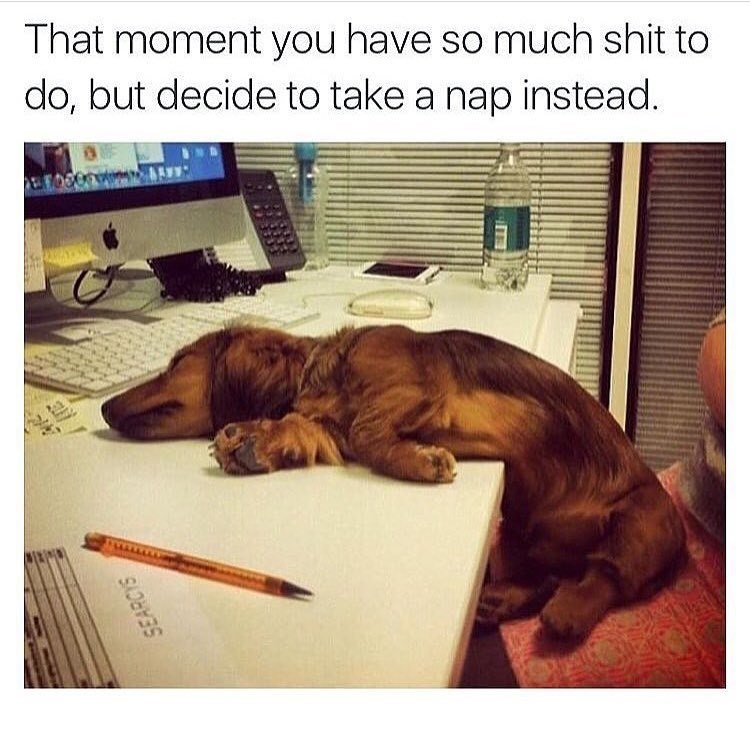 Funny meme with a dachsund dog asleep on a desk, saying when you have a lot to do but you take a nap anyway.
