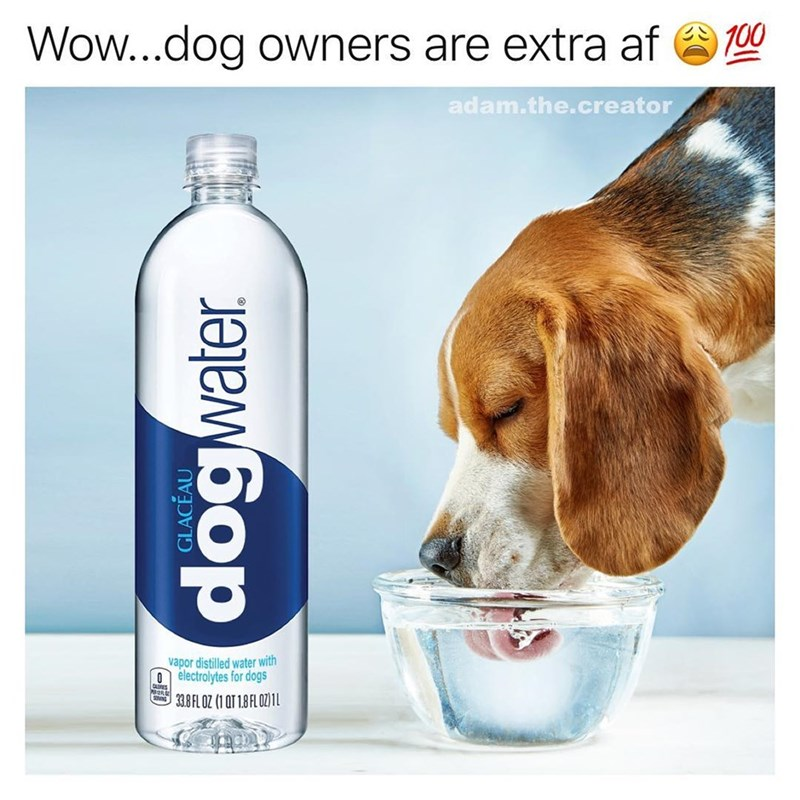 "Funny meme featuring a photoshopped smartwater bottle that says Glaceau ""dog water."""