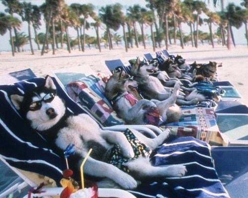 dog chilling out on the beach