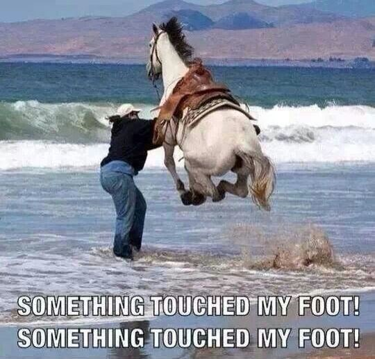 Horse - SOMETHING TOUCHED MY FOOT! SOMETHING TOUCHED MY FOOT!
