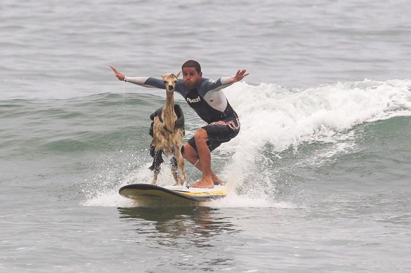 Surfing Equipment - TpCLEl