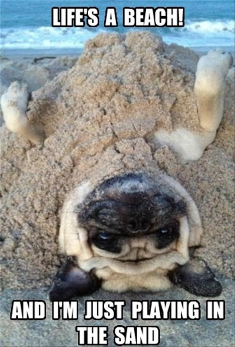 Photo caption - LIFE'S A BEACH! AND IM JUST PLAYING IN THE SAND