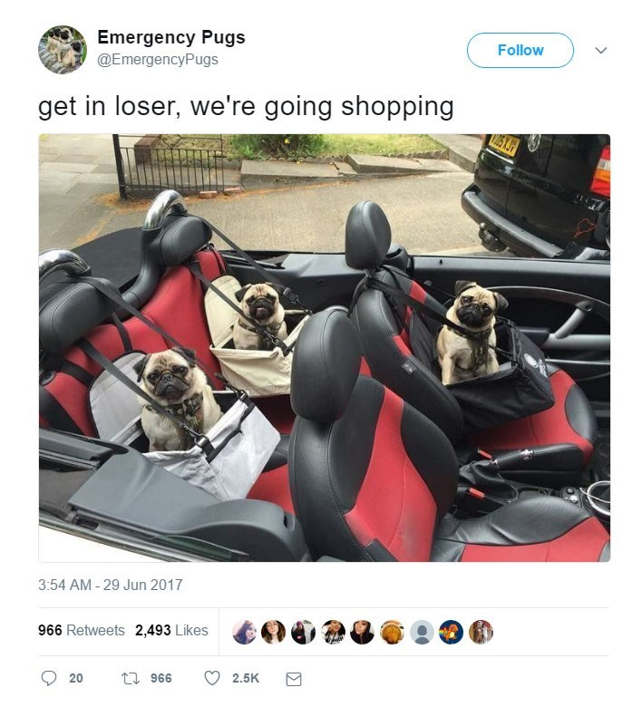funny tweets - - Fictional character - Emergency Pugs @EmergencyPugs Follow get in loser, we're going shopping 3:54 AM - 29 Jun 2017 966 Retweets 2,493 Likes t 966 2.5K 20
