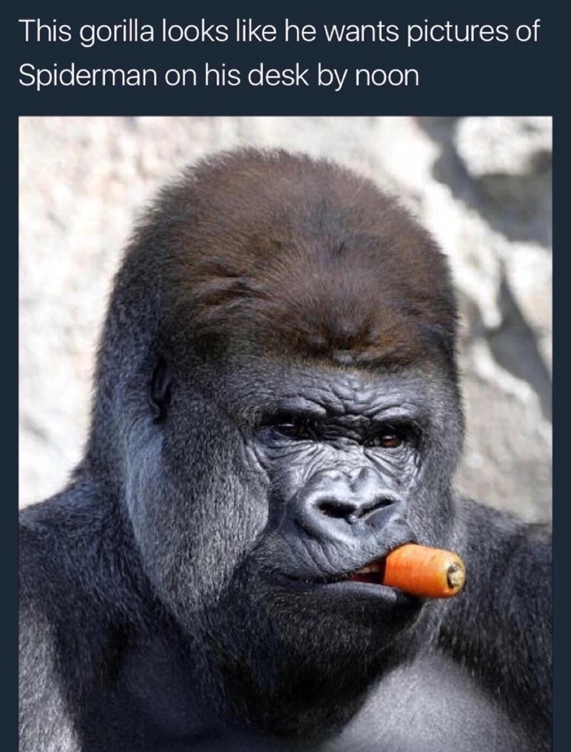 Thursday meme of a gorilla eating a carrot and looking serious
