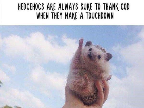 Adaptation - HEDGEHOCS ARE ALWAYS SURE TO THANK COD WHEN THEY MAKE A TOUCHDOWN