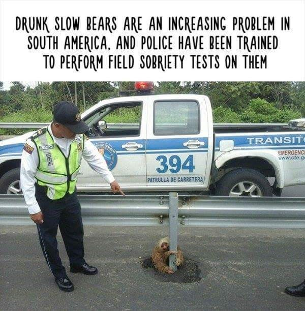 Motor vehicle - DRUNK SLOW BEARS ARE AN INCREASING PROBLEM IN SOUTH AMERICA, AND POLICE HAVE BEEN TRAINED TO PERFORM FIELD SOBRIETY TESTS ON THEM TRANSIT EMERGENCI www.cte.ge 394 PATRULLA DE CARRETERA