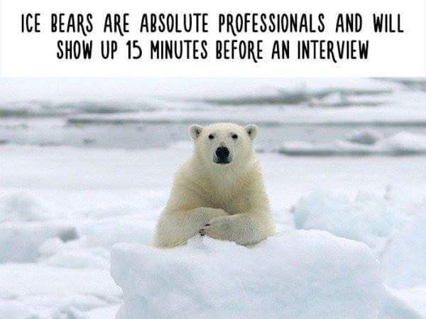 Polar bear - ICE BEARS ARE ABSOLUTE PROFESSIONALS AND WILL SHOW UP 15 MINUTES BEFORE AN INTERVIEW