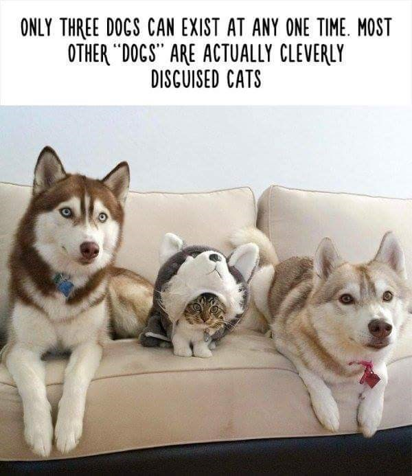 """Mammal - ONLY THREE DOGS CAN EXIST AT ANY ONE TIME. MOST OTHER """"DOCS"""" ARE ACTUALLY CLEVERLY DISCUISED CATS"""