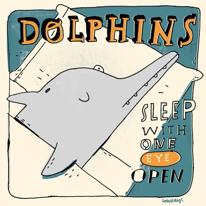 Coloring book - DOLPHINS SLEEP WITH ONE ΕΥΕ OPEN oWERAY