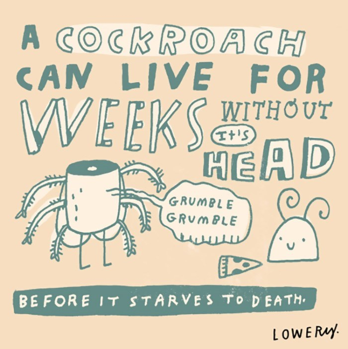 Font - A COCKROACH CAN LIVE FOR WITHOUT WEEKAD It'S GRUMBLE GRUMBLE BEFORE IT STARVES TO D EATH LOWERAY