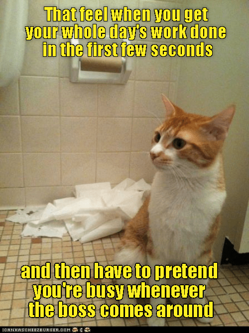lolcats picture - 9049480704