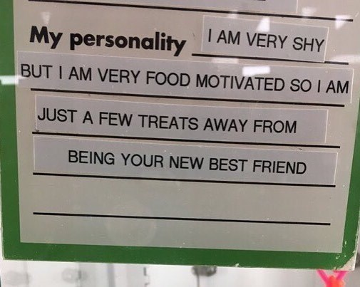 Funny meme with a pet description that says shy but food motivated, a relatable post.