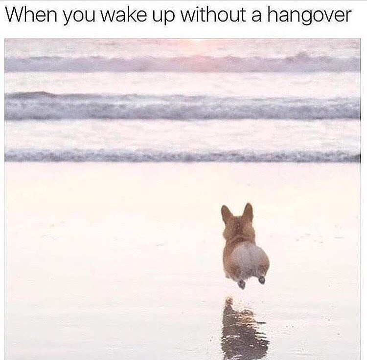 drinking dogs hangovers Memes - 9049738496