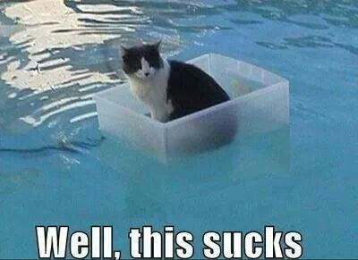 Cat floating in a plastic container in the pool with caption WELL THIS SUCKS