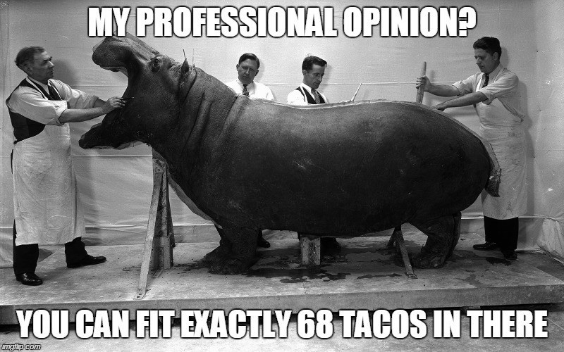 Doctors looking at a large hippopotamus and estimating that 68 tacos would fit in there.
