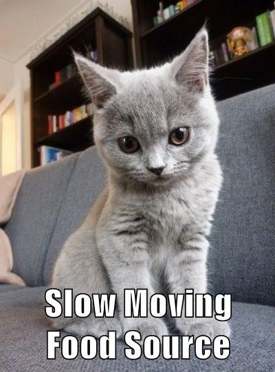 cat describes you in 4 words SLOW MOVING FOOD SOURCE