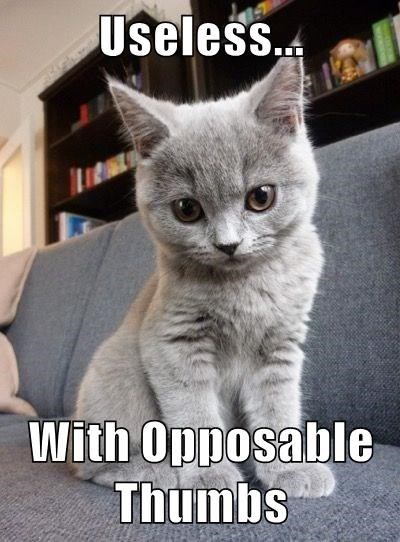 cat describes you in only four words as Useless... with opposable thumbs