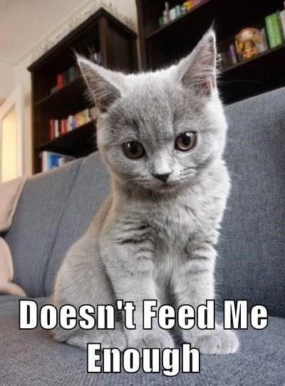 cat describes you in only four words as DOESN'T FEED ME ENOUGH