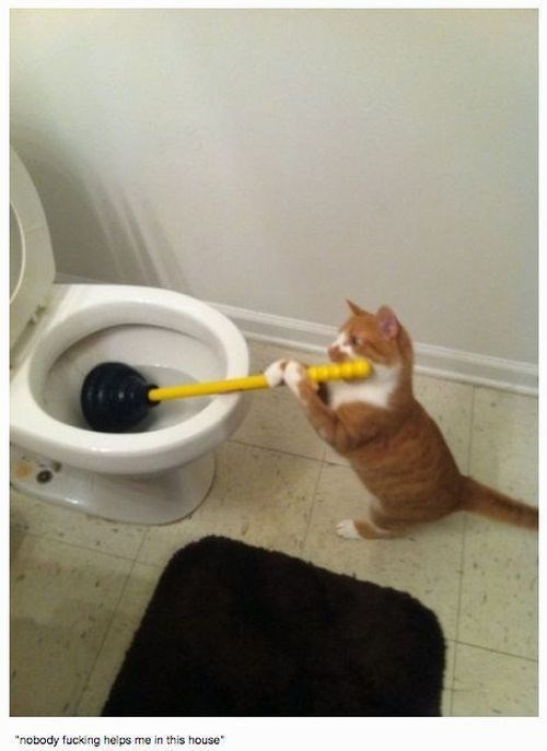 Cat with a plunger down the toilet, as if he is doing house work.