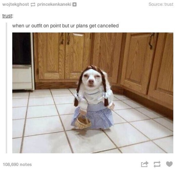 Dog dressed up like old house maid, caption as when your outfit is on point, but the plans get cancelled.
