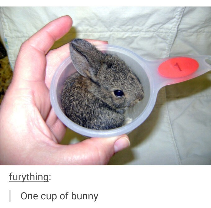 One small cup of bunny.