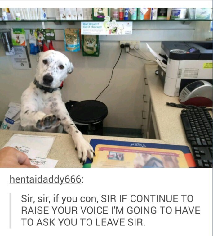 Dog behind a desk being very formal in a funny way.