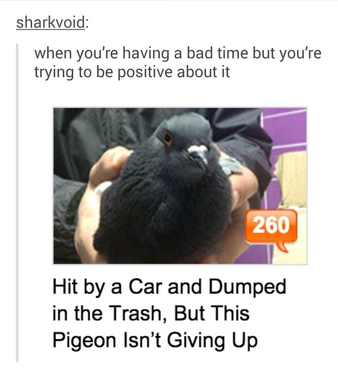 one tough pigeon that looks robust even after being hit by a car and dumped in the trash.