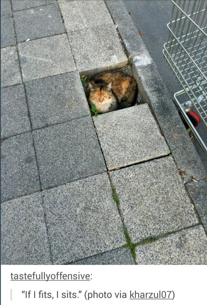 if it sit it fits photo of a cat in a missing block on the sidewalk