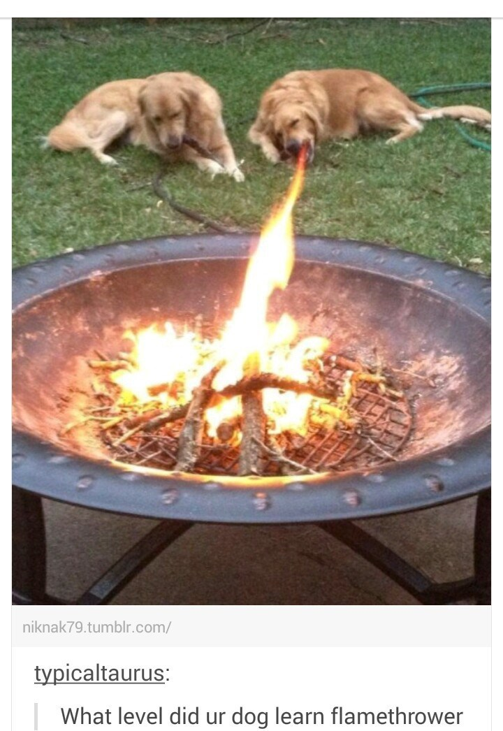 Dogs chilling out by the BBQ with pic taken with perfect timing to look like the dog is breathing flamethrower