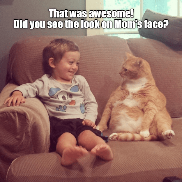 cat meme - Facial expression - That was awesome! Did you see the look on Mom's face?