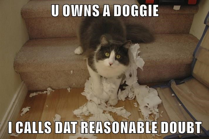 Cat lawyering up after being caught red handed making a mess of the toilet paper.