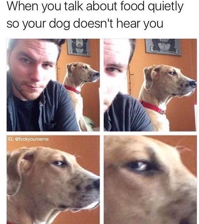 Funny meme about speaking quietly about food around your dog, close up of dog's face looking angry.
