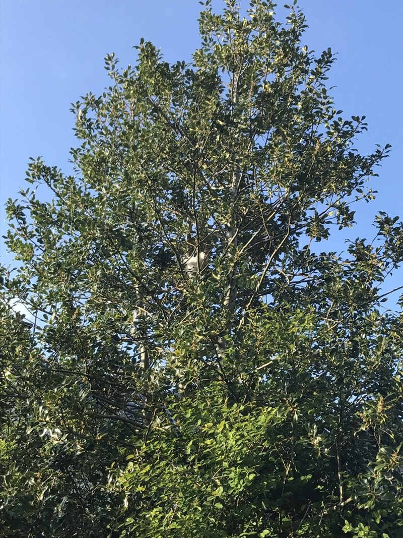 find the cat hiding in the tree