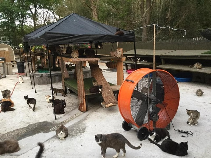 Chris Arsenault created a cat haven for felines, amazing place for cats to live and play.