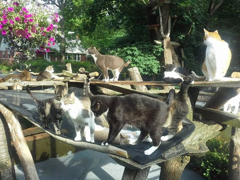 Cats hanging out at Chris Arsenault's sanctuary