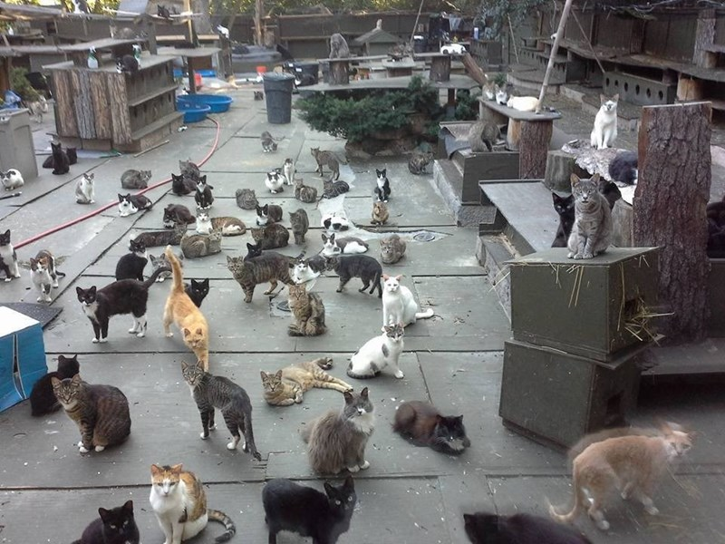 the cats having fun chilling out at Chris Arsenault's cat sanctuary.