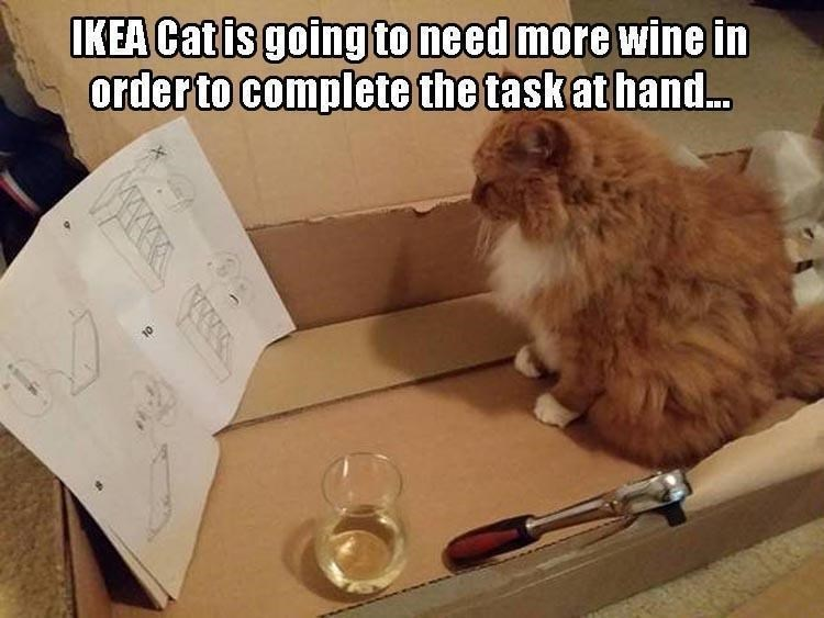 Cat with some tools and a glass of wine reading the instructions for an IKEA product.