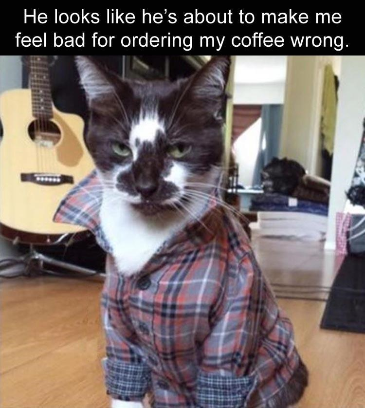 Cat dressed in plaid that looks like he is about to make you feel bad for ordering the coffee wrong