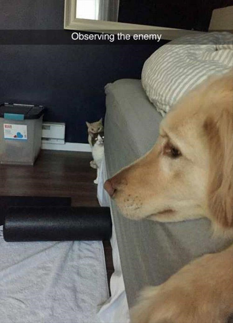 Cat and dog duel snapchat as Observing The Enemy