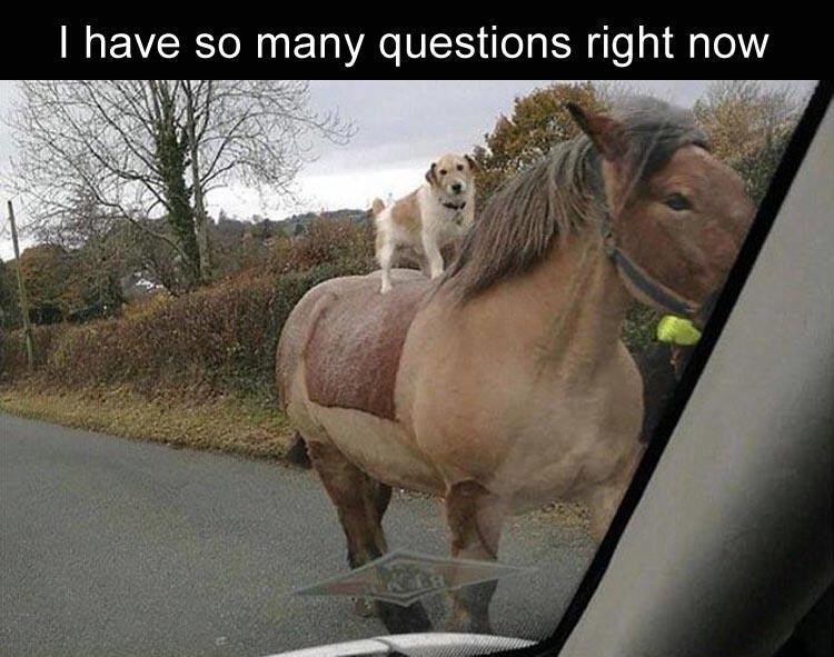 Cute picture of a dog riding a horse, and captioned that I HAVE SO MANY QUESTIONS RIGHT NOW