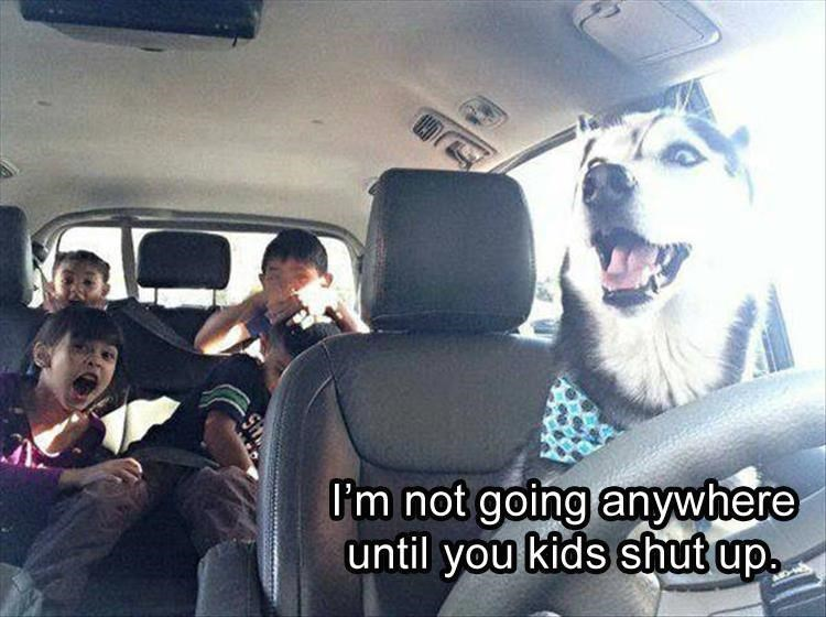 Picture of what looks like a dog driving the car with caption saying I AM NOT GOING ANYWHERE UNTIL YOU KIDS SHUT UP