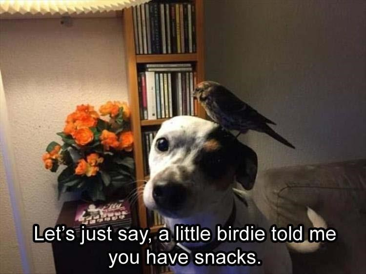 Dog with a little birdie on his head that may have said something about snacks.