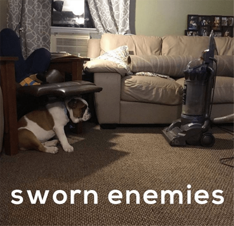Dog is sworn enemies with the vacuum cleaner.
