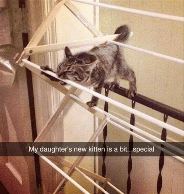 Funny snapchat of someone's daughter's cat.